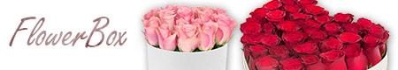 Flowerbox Delimaro