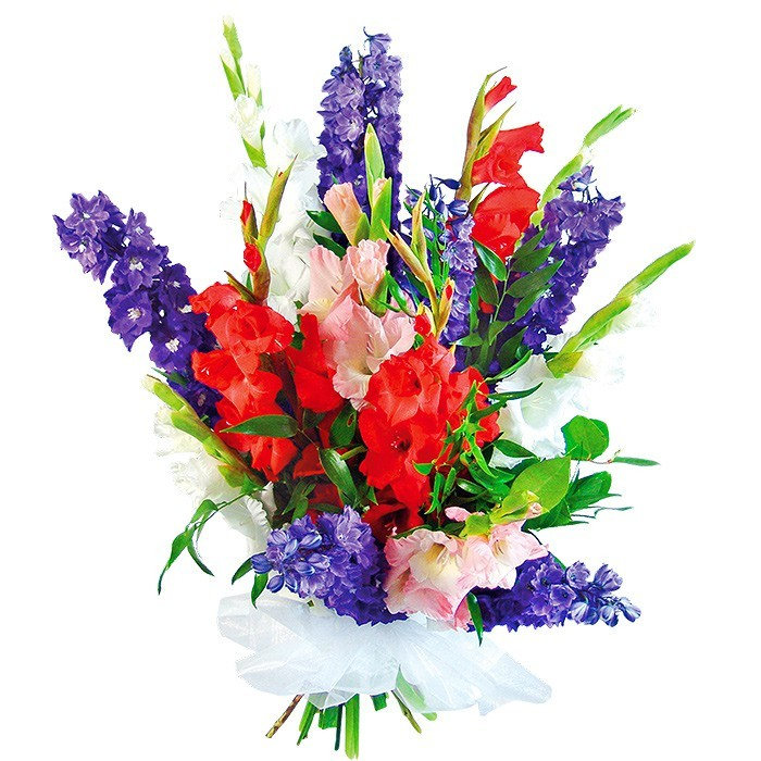 Bouquet huge applause, colourful gladiolas, decorative greenery,  bouquet of flowers wrapped in white organza