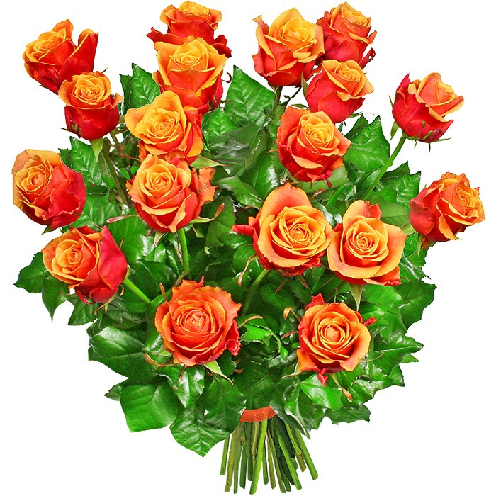 Splendor bouquet, bouquet of 18 tea roses, tea roses with delivery