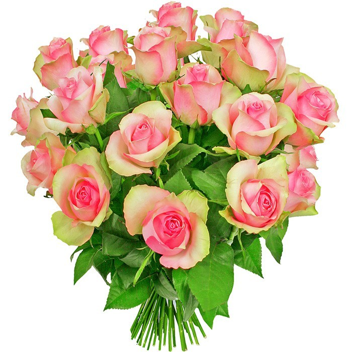 Flowers Dreaming, 18 pink roses arranged round, a bouquet of pink roses