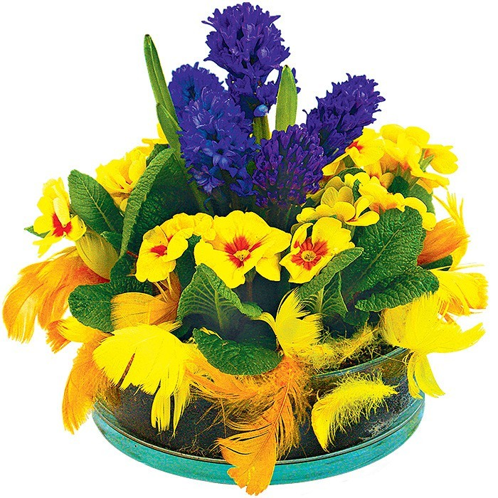 hiacynt i prymula, kompozycja wielkanocna, hiacynt doniczkowy, prymule, mech, żółte i pomarańczowe pióra, okrągłe naczynie