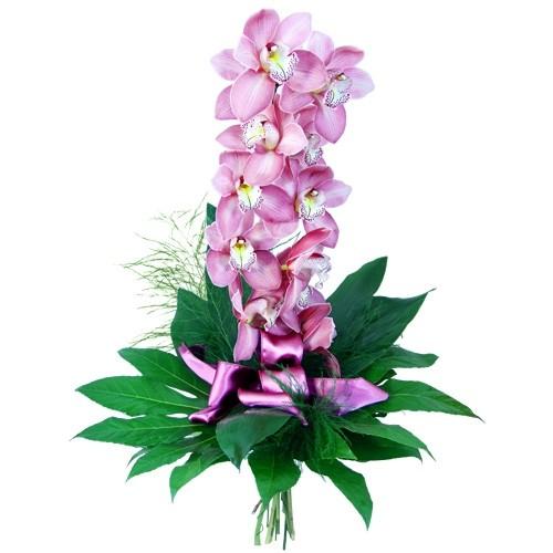 Storczyk - finezja i elegancja, fioletowy storczyk z facją i treefernem