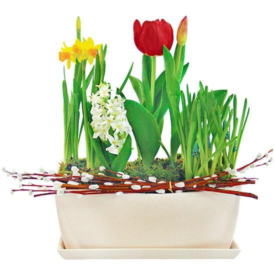 świąteczna elegancja, żonkil, hiacynt, szafirki, bazie, kompozycja kwiatów w białym naczyniu