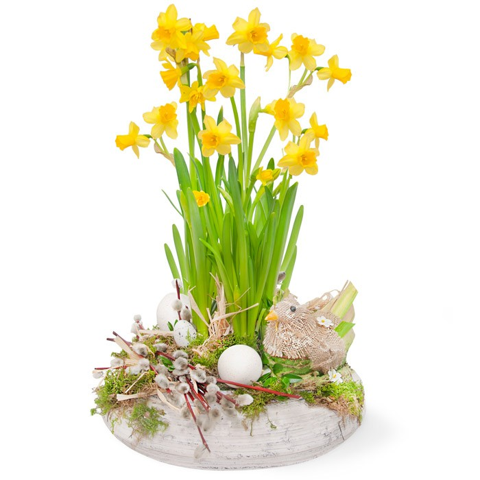 Easter centrepiece daffodils, daffodils in a pot decorated with chicken, bases, eggs, moss, reef, boxwood, Easter centrepiece