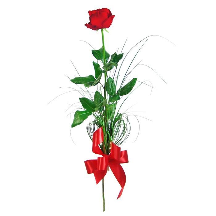 Elegancka róża, czerwona róża i zielona trawa ze wstążką