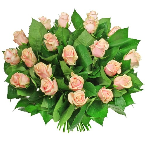 Flowers of Fortuna, a bouquet of 20 cream roses, light pink roses in a spiral bouquet