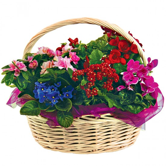 Koszyk kwiatowych różności