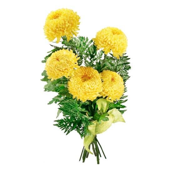 Kwiaty - chryzantema