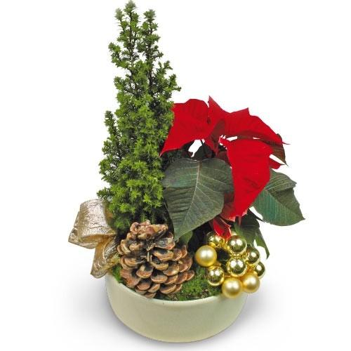 Kompozycja z drzewkiem, stroik z drzewkiem iglastym, gwiazda betlejemska ze świątecznymi dodatkami