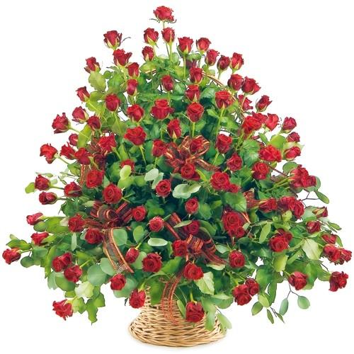 100 czerwonych róż w koszu ze wstążką, 100 róż w koszu, kosz z czerwonymi różami ułożonymi kaskadowo
