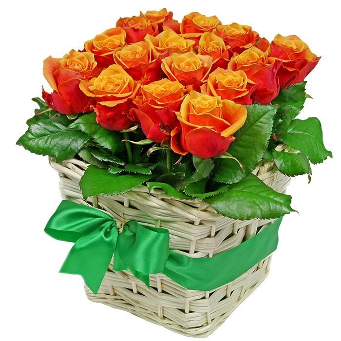 kompozycja gorące uczucie, 16 róż herbacianych, bukiet w wiklinowym koszu przewiązanym zieloną wstążką