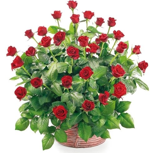 30 red roses basket, long roses in wicker basket, love composition