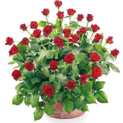 kosz 30 czerwonych róż, długie róże w koszu wiklinowym, kompozycja miłosna