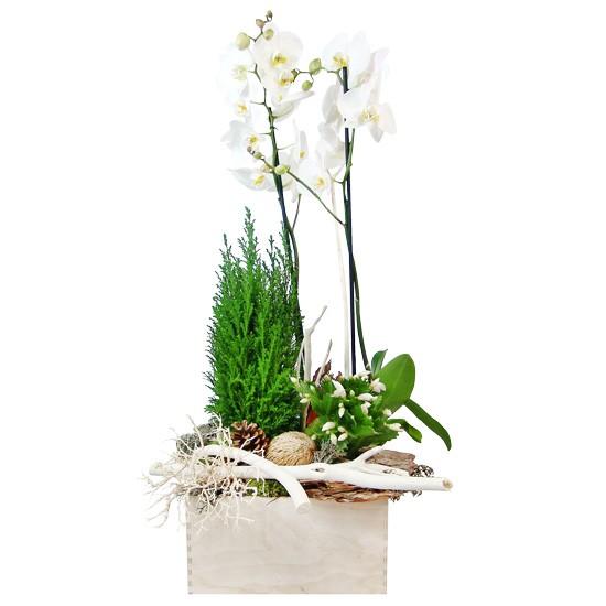 Stroik lesisty, stroik z phalaenopsis dwupędowego, cyprysu, grudniaka, suszonego korzenia, szyszki, kory, suszu, stroik świąteczny