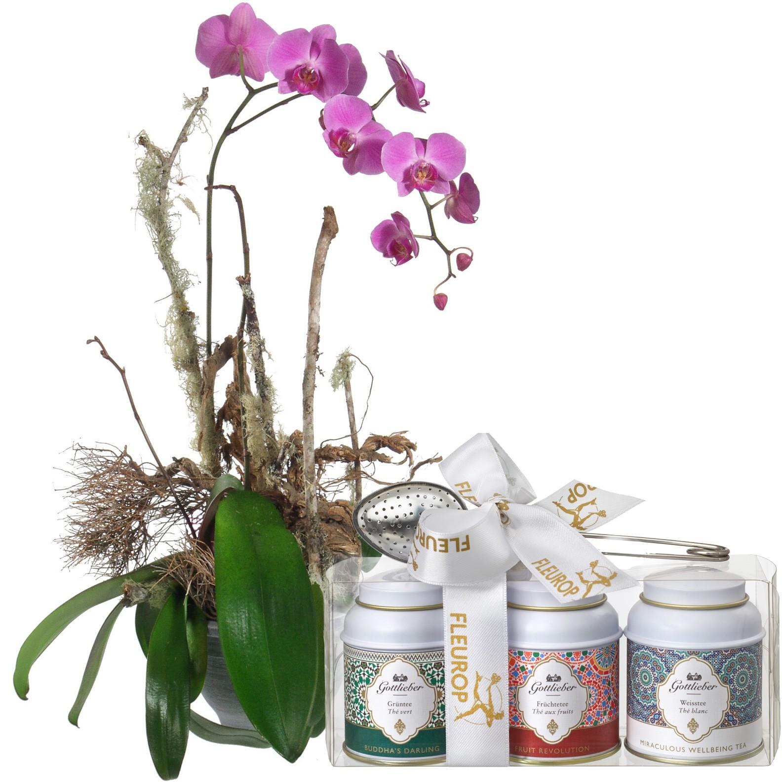 Edle Orchidee Pflanze Mit Gottlieber Tee Geschenk Set