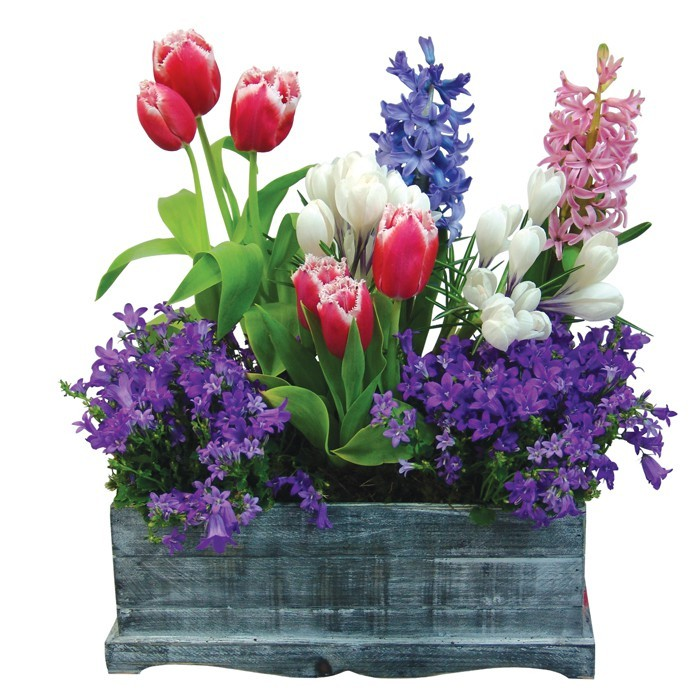 Composition Provencal garden, composition of flowers in a wooden box, red tulips, hyacinths, moss, red white purple flowers