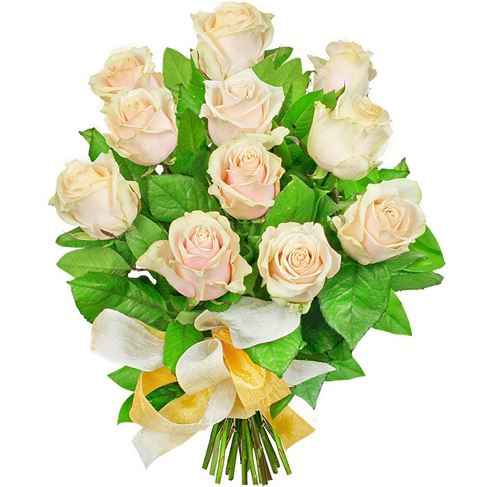 Flowers Brilliance Morning, a bouquet of 11 creamy roses with a light ribbon