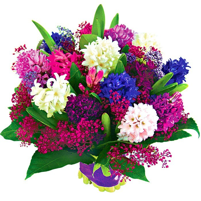 Coloured hyacinths with delivery, bouquet of hyacinths and gypsophilaboards, 15 coloured hyacinths