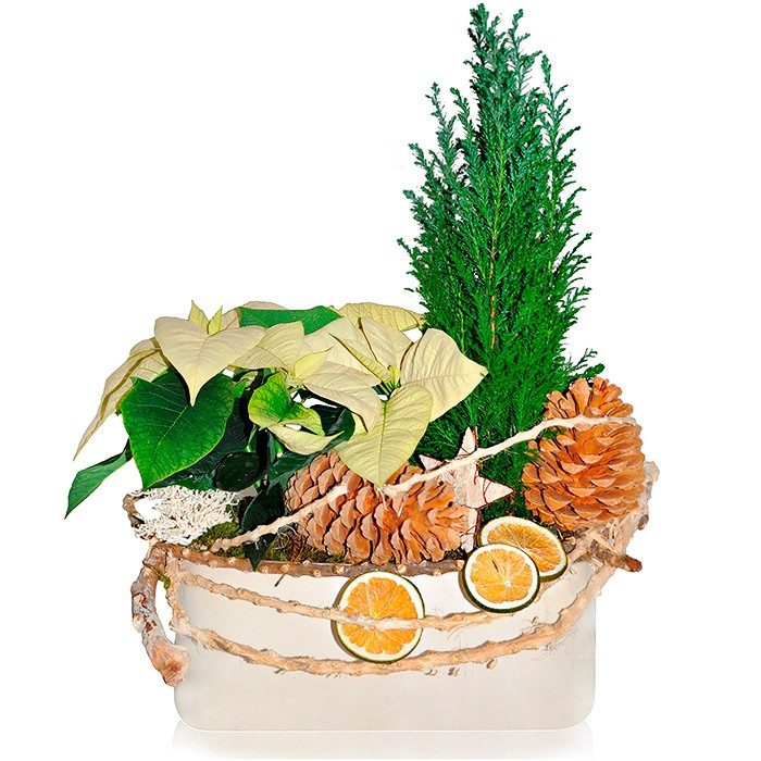 Exclusive centrepiece, centrepiece made of licence, cone, cypress, vine shoot, dried fruit, moss ceramic pot, exclusive centrepiece