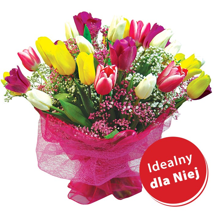 Tulipanowa Tęcza, bukiet z 25 kolorowych tulipanów, tulipany z gipsówką