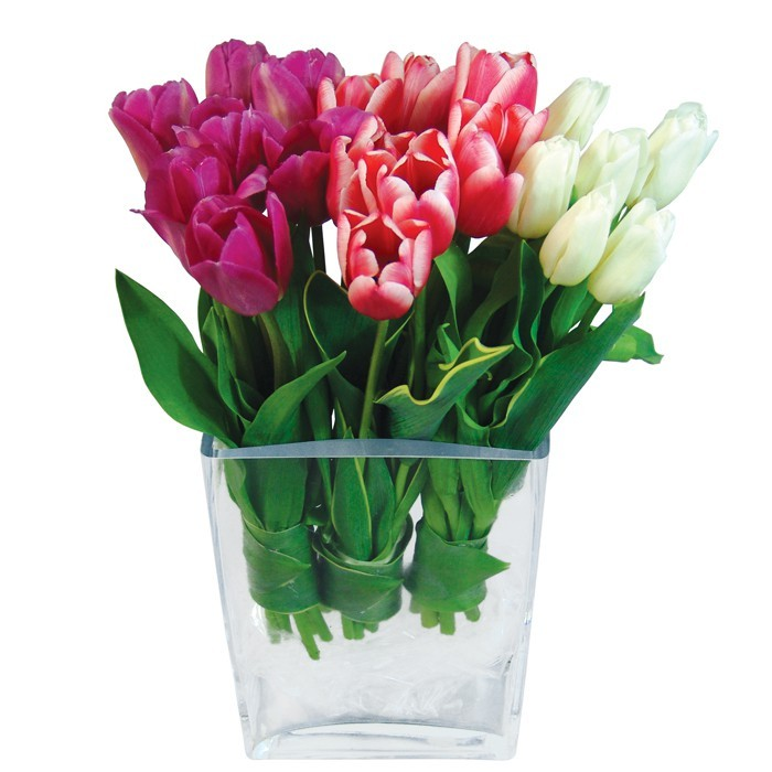 Three Shades of Love, tulips in a vase, tulips in three colours