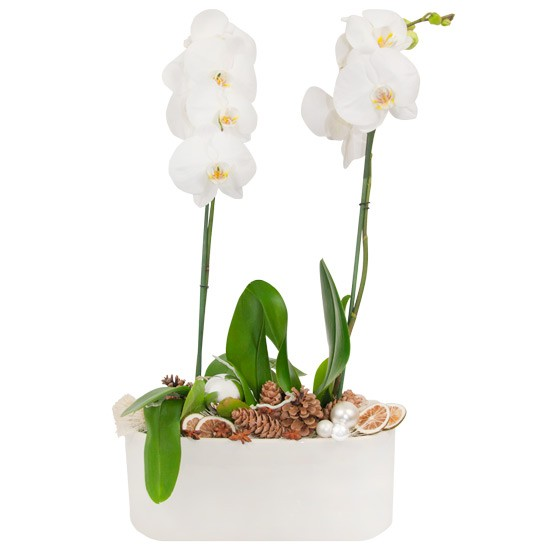 Christmas orchid, white orchid, white pot, ornaments, cones, baubles, palm bark
