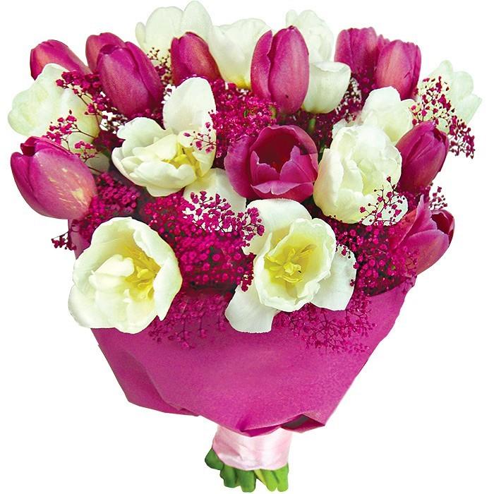 bukiet biało-różowy, białe tulipany, różowe tulipany, gipsówka, bukiet w purpurowym papierze owiniętym różowa wstążką