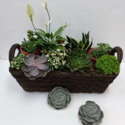 Kompozycja roślin w koszyku