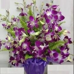 Układ roślin kwitnących
