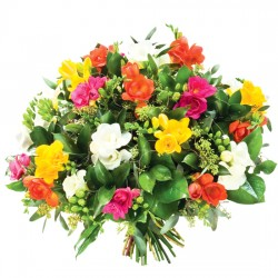 A bouquet of colourful freesias