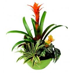 Kompozycja roślin doniczkowych