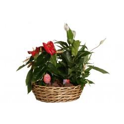 Kompozycja kwiatów w doniczce