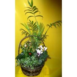 Kompozycja roślin