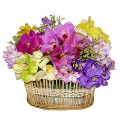Kolorowe orchidee