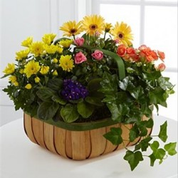 Kosz łagodnych kwiatów