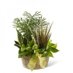 Kompozycja roślin doniczkowych w koszu
