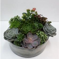 Rośliny w szklanym wazonie
