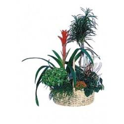 Kompozycja roślinna