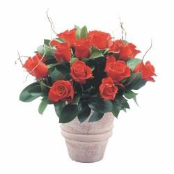 Klasyczne róże