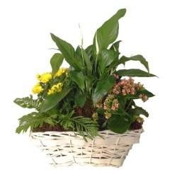 Mieszane kwiaty w koszyku