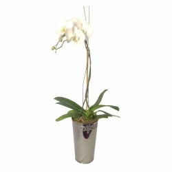 Orchid In Decorative Vase