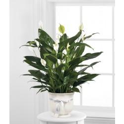 Piękna aranżacja kwiatowa w doniczce