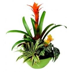 Aranżacja roślin doniczkowych