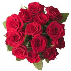 12 Rote Rosen<br>ohne Beiwerk