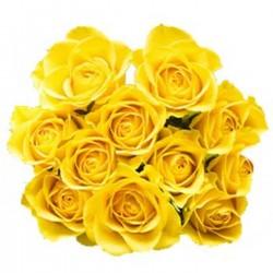12 Gelbe Rosen