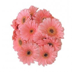 Gerbera Bunch - Pink(Other colours available)