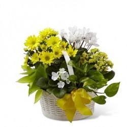 Kosz żółto-białych kwiatów