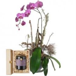 Szlachetna Orchidea ze szwajcarskim miodem