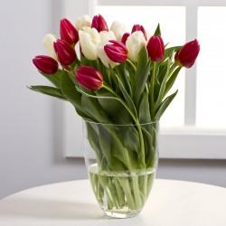 Bukiet białych i czerwonych tulipanów