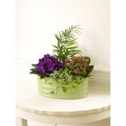 Roślinna aranżacja florysty